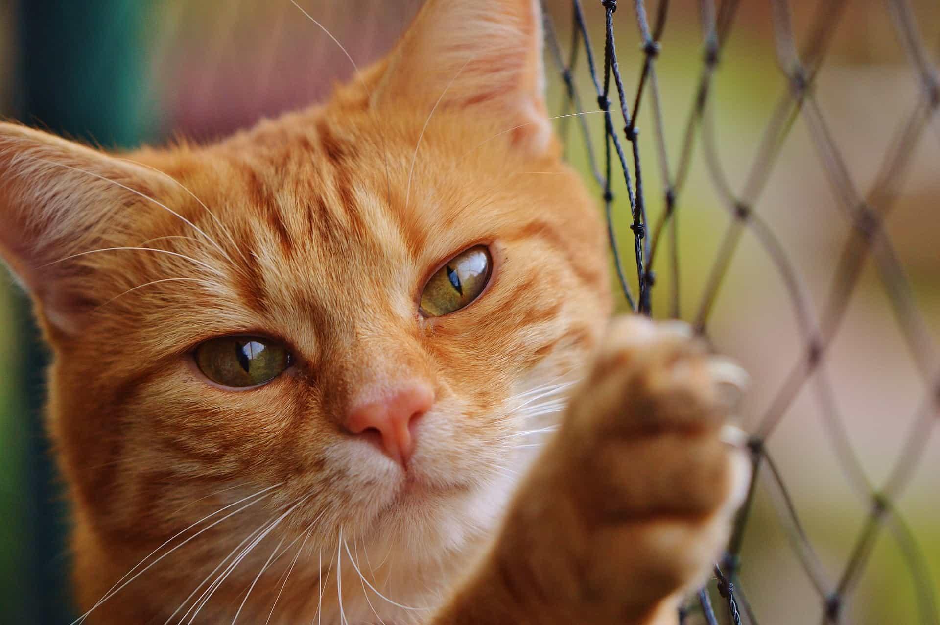 Katze mit Pfote am Katzenschutznetz.