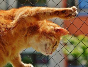 Katze spielt mit dem Katzennetz