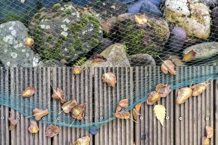 Teichnetz - Nahaufnahme eines grünen Teichnetzes über großen Steinen und teilen eines Gartenteiches, neben einem Holzweg mit trocknen Blättern, Draufsicht